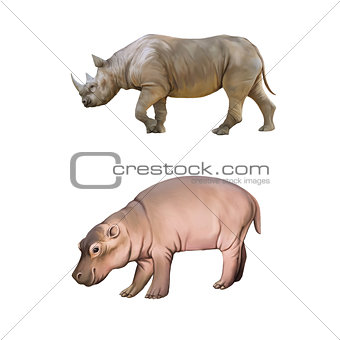 baby hippopotamus, Big african Rhino isolated on a white background