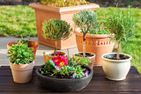 Flower pots with herbs and flowers