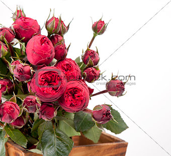 Beautiful bouquet of roses Peony