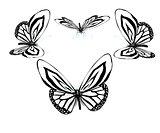 fancy butterflies