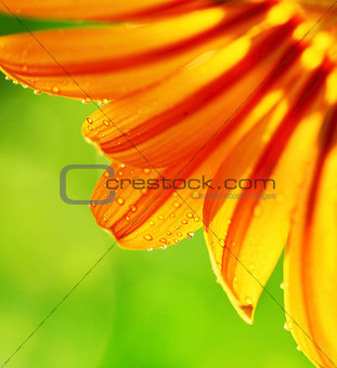 Abstract flower petals, colorful floral border