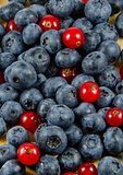 Red currants and blueberries