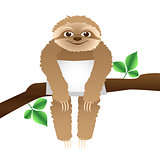 sloth with a pillow sitting on a branch