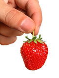 Fresh, juicy and healthy strawberries in the hands, isolated