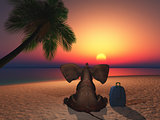 Elephant sitting on a beach at sunset