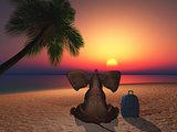 Elephant sitting on a beach at sunset