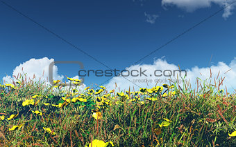 3D landscape with buttercups and grass
