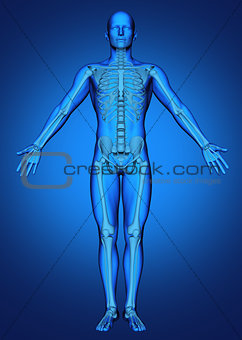 3D male figure with skeleton