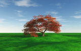 Maple tree landscape