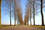 Road and Line of trees
