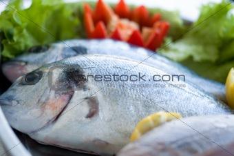 fresh bass