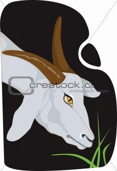 A goat