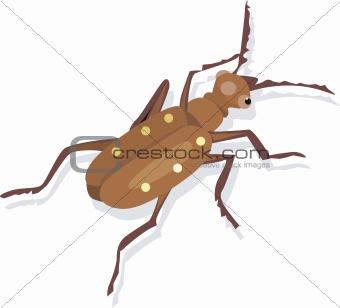 A wild bug