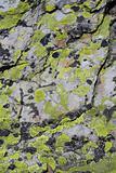 green musk on dolomites stone