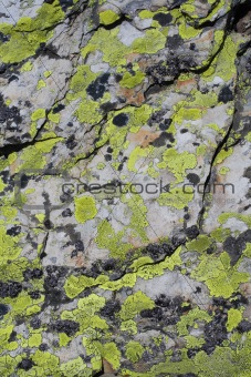 green musk on dolomites stone