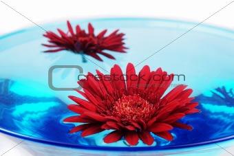 Celebration Flower in glass