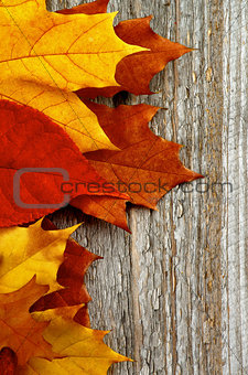 Frame of Autumn Leafs