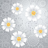 Daisy flowers on gray background.