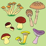 Various mushroom collection 01