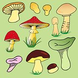 Various mushroom collection 02