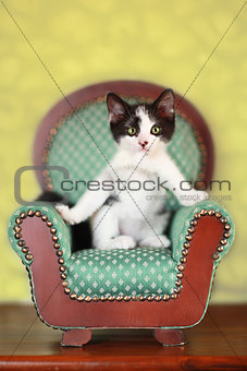 Kitten Sitting on a Chair
