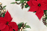 Poinsettia Flower Border
