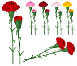 Red carnations isolated on white