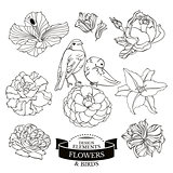 Set of flowers and birds vector illustration
