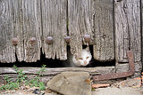 Wounded cat through old wooden door hole
