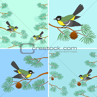 Titmouse on pine branch, set