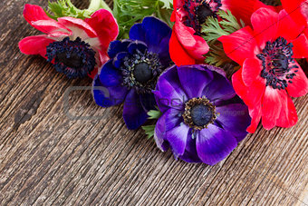 blue and red anemone flowers