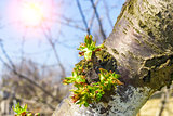 Tree branch with buds in sun beams