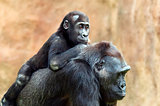 Young gorilla and its mother
