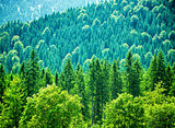 Fresh green forest