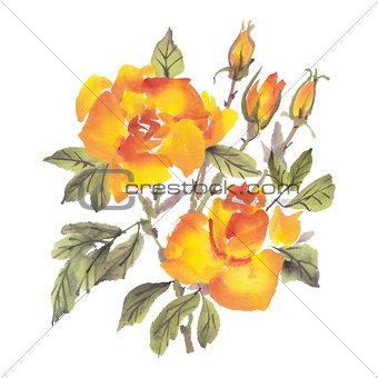 Watercolor flowers. Roses