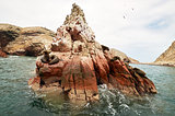 sea lion on rocky formation Islas Ballestas, paracas