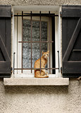 red cat sitting at the window