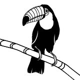 Toucan bird head vector illustration for t-shirt.