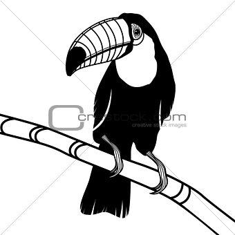 Toucan bird head vector illustration for t-shirt.