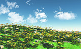 3D landscape with buttercups