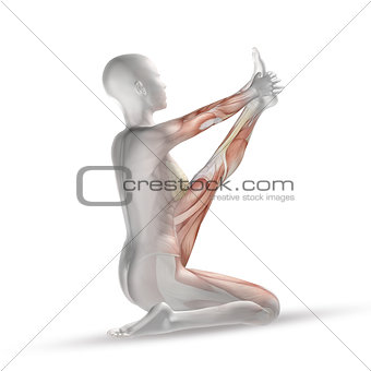 3D female medical figure with muscle map in yoga position