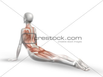 3D female medical figure with spine in yoga position