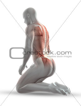 3D male medical figure with muscle map in kneeling position