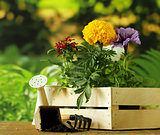 garden flowers, tools (rake, shovel, watering can)