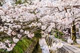 Kyoto Spring Foliage