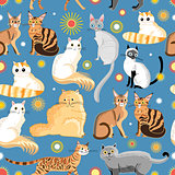 graphic pattern different breeds of cats