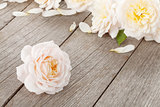Fresh rose flowers on wooden background