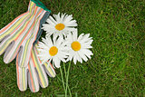 Garden gloves and chamomile flowers