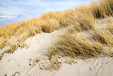 Golden Dune grass on the Baltic Sea