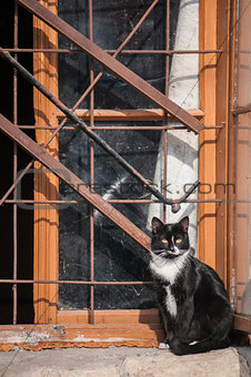Cat at grunge window